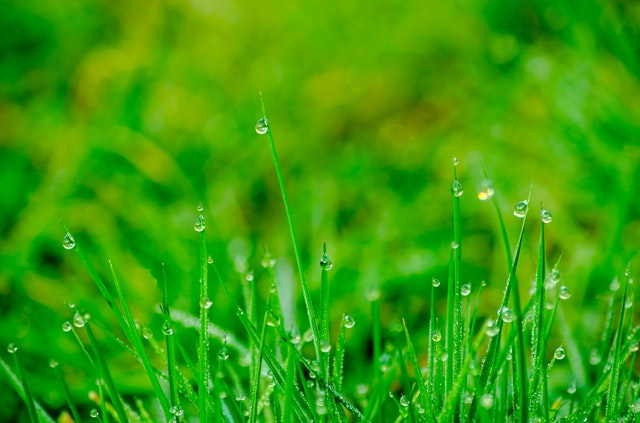 How to Water Your Lawn