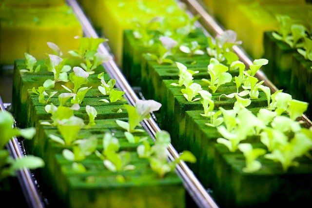 How to Start a Hydroponic Garden for Beginners