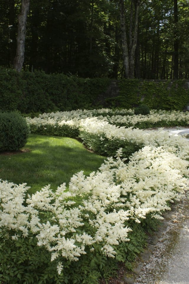 Flower Border ideas