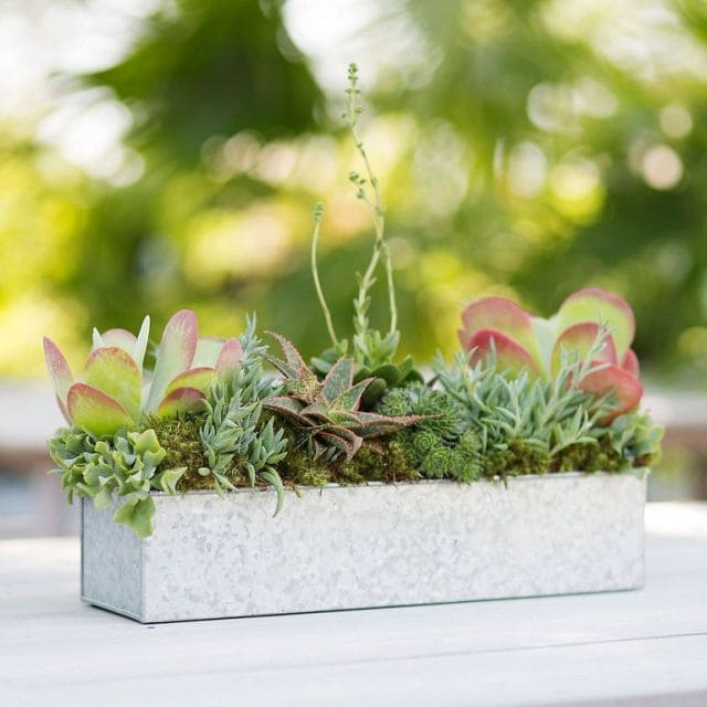 Mini Trough Planter