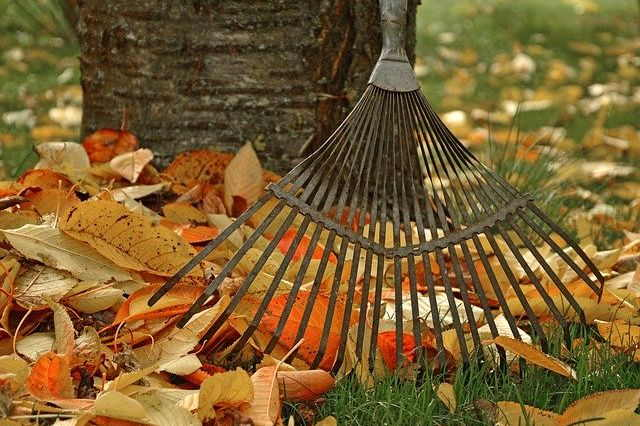 Why You Should Rake Your Leaves 1