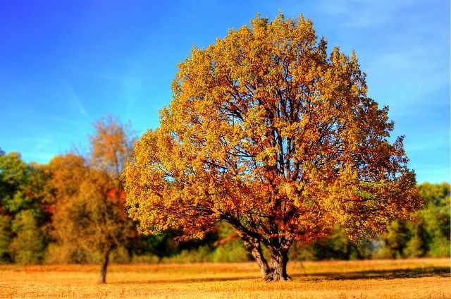 Trees You Should Never Plant in Your Yard