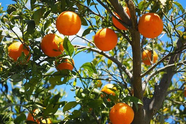 How to Plant New Fruit Trees