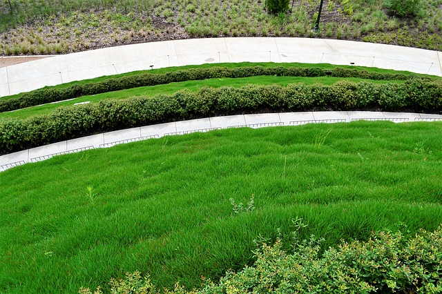 edge your lawn