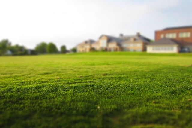How to Get a Thicker Lawn