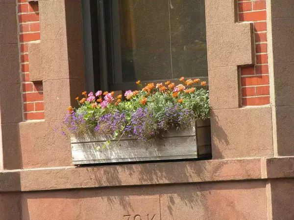City Window Box