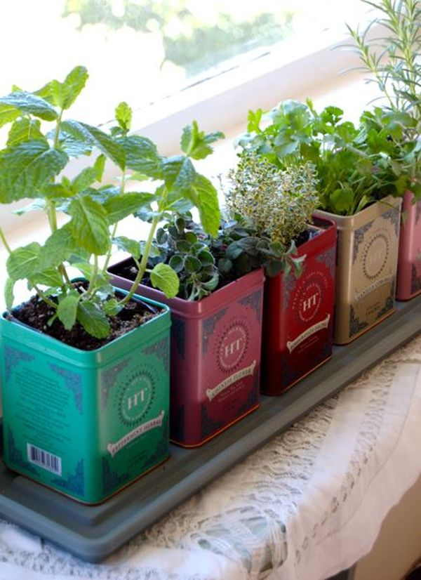 DIY Tea Tin Garden