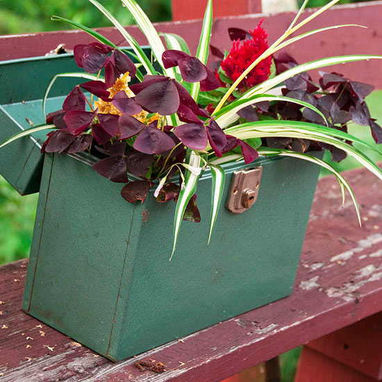 Lunch Box Container Garden