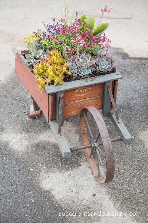 Plants in a Wheelbarrow