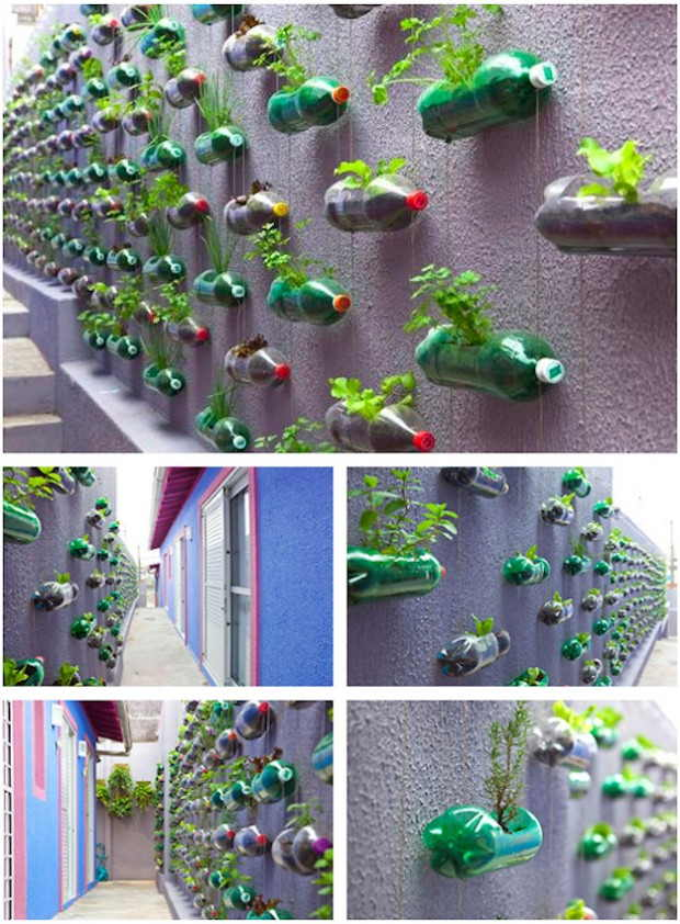 Soda Bottle Container Garden
