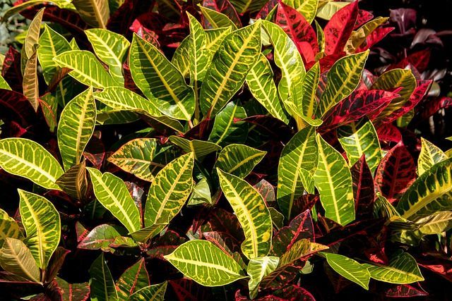 How to Grow & Care for Crotons