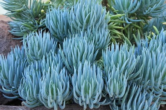 Blue Chalksticks