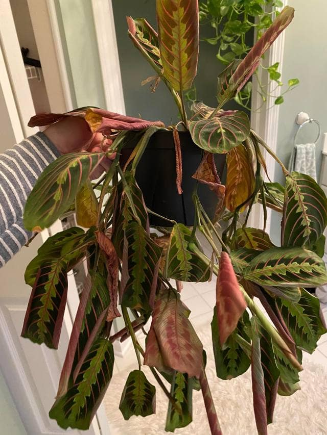 Insecticidal Soap plant damage